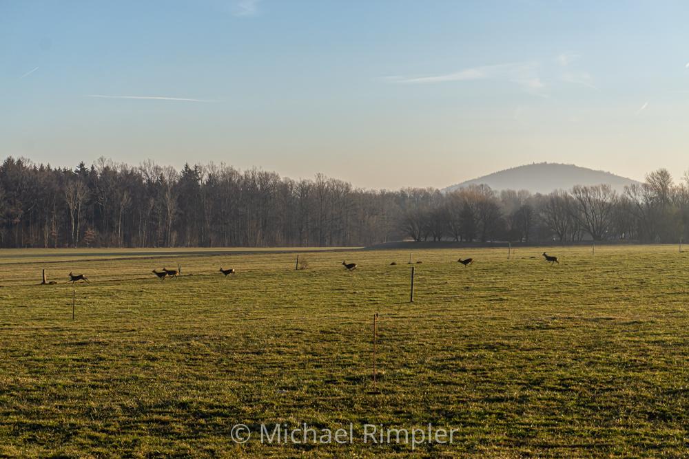 """sonnenaufgang, februar, """"alte landstraße"""", rehe, textildorf, großschönau, naturpark, zittauergebirge, oberlausitz, fotos, bilder"""