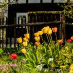 großschönau, textildorf, frühling, tulpen, naturpark, zittauergebirge, oberlausitz, fotos, bilder
