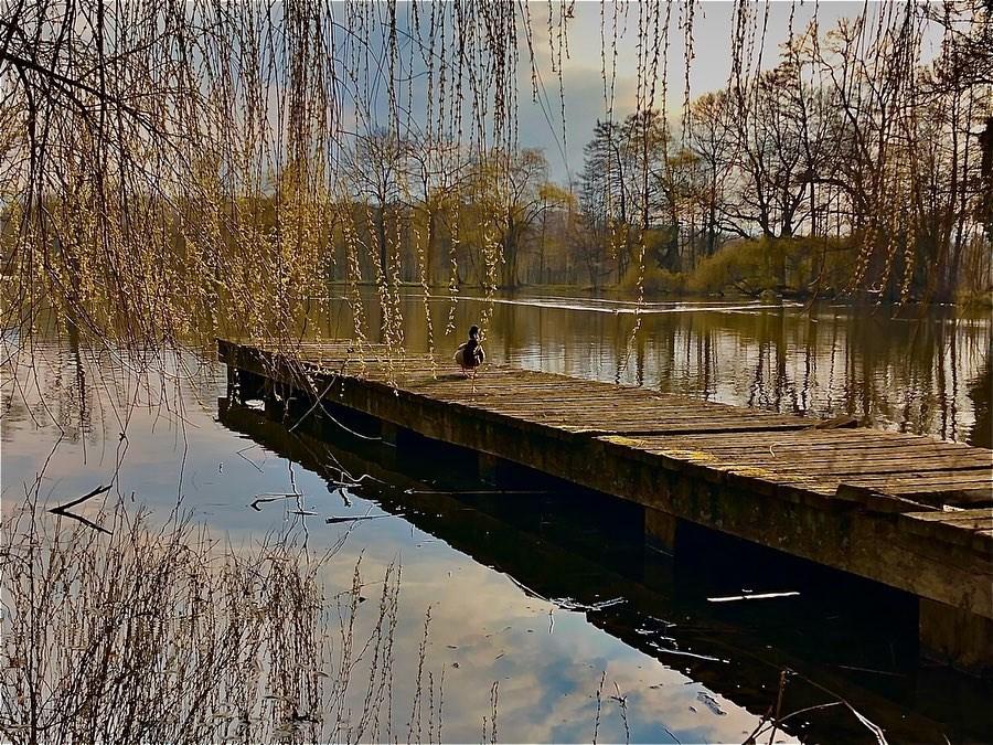 """frühling, westpark, """"pethauer teich"""", steg, zittau, oberlausitz, """"naturpark zittauer gebirge"""", bilder, fotos,"""