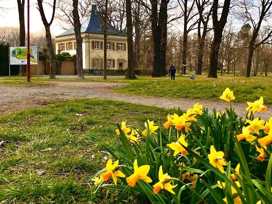 """frühling, westpark, osterglocken, narzissen, zittau, oberlausitz, """"naturpark zittauer gebirge"""", bilder, fotos,"""