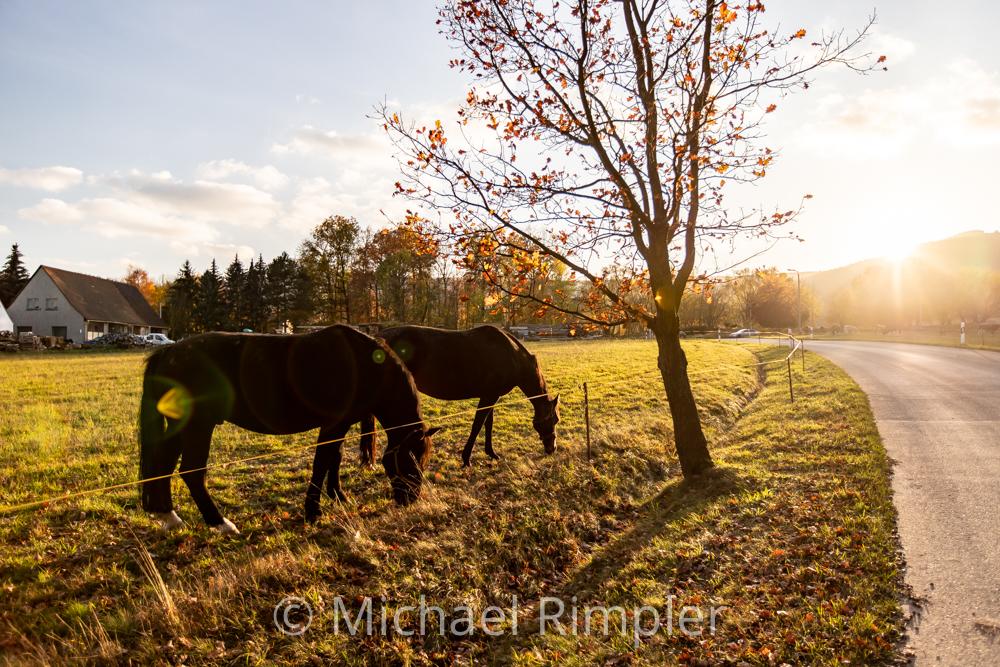 waltersdorf, pferde, sonnenuntergang, herbst, naturpark zittauergebirge, oberlausitz, fotos, bilder