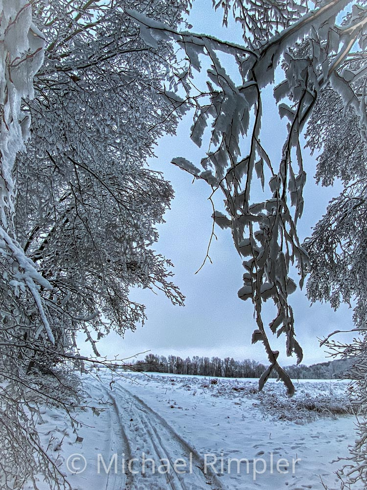 winterwanderung, hofebusch, wanderung, schnee, textildorf, großschönau, spitzkunnersdorf, naturpark zittauergebirge, oberlausitz, fotos, bilder